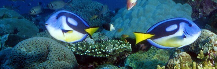 blue_aqua_zoo_home_aquaristik